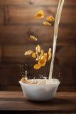 Falling corn flakes with milk splash on wood Royalty Free Stock Photography