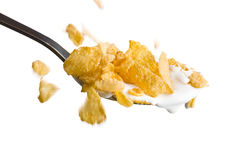 Falling cornflakes on the spoon with milk Royalty Free Stock Photography