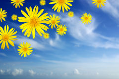Falling Daisies Stock Photography