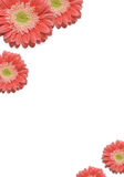 Falling Daisies Royalty Free Stock Images