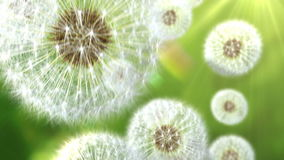 Falling dandelions. Abstract background. seamless looping 3d animation stock illustration
