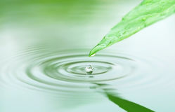 Falling droplets from herbal leaf Stock Photos