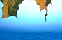 Falling drops Stock Photos