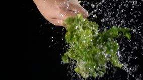 Falling drops of water while shaking off a leaf of parsley stock video footage