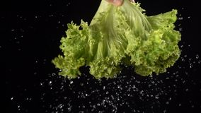 Falling drops of water while shaking off a leaf of salad stock video