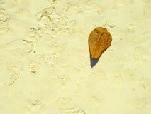 Falling dry leaf on sand beach texture Stock Photos