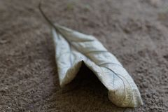 Falling Dry leaves. A dry leaf falling in the soil. Falling leaves ,dry leaf stock photography