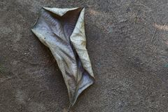 Falling Dry leaves. A dry leaf falling in the soil. Falling leaves ,dry leaf royalty free stock photo