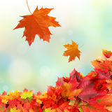 Falling fall leaves Stock Images