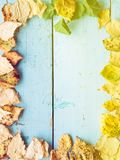 Falling fall leaves Stock Image