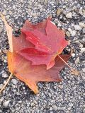 Falling for fall royalty free stock photos