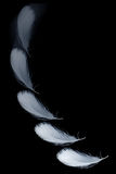Falling feather Stock Photography