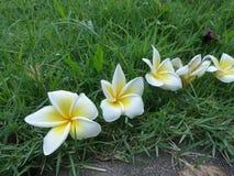 Falling flowers on green lawn Stock Photo