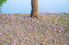 Falling flowers. Falling pink flowers under tree in the garden Royalty Free Stock Photos