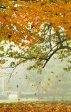 Falling Foliage Stock Photo