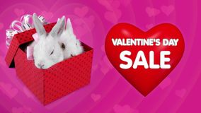 Falling gift box surprise on Valentines day sale, funny couple of bunnies. 3D Animation flying big red heart with text, pink background stock video