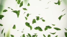 Falling ginkgo leaves stock video footage