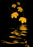Falling Golden Leaves Royalty Free Stock Images
