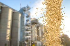 Falling grain. Of wheat against the background of silo Stock Images
