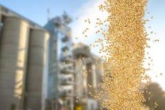 Falling grain Stock Images