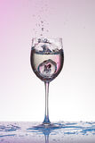 Falling grape into a wineglass with water splashes on gradient pink to white. Stock Images