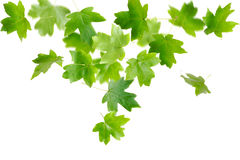 Falling Green Leaves Royalty Free Stock Images