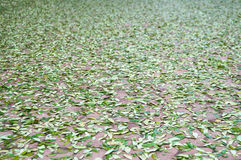 Falling green leaves on block concrete floor.  royalty free stock image