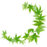 Falling green leaves Royalty Free Stock Photo