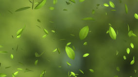 Falling green leaves stock footage