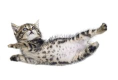 Falling kitten Royalty Free Stock Photos