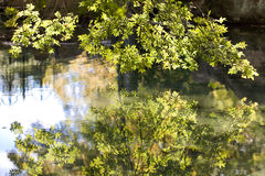 Falling landscape. Reflection green tree branch in the water Royalty Free Stock Photos