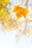Falling Leaf Royalty Free Stock Photos