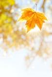 Falling Leaf Royalty Free Stock Photos