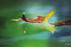 A falling leaf Stock Images