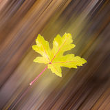 Falling leaf in autumn Stock Photo