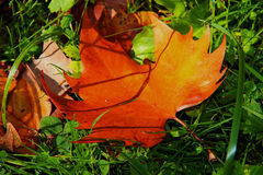 Falling leaf Stock Photography