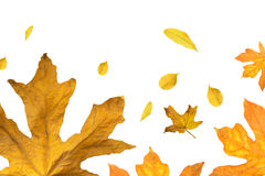 Falling leaf background Stock Photography