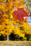 Falling leaf Stock Photos