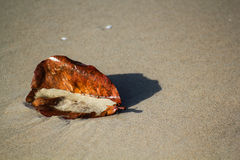 Falling leaf. Fall leaf lay down on he sea shore Royalty Free Stock Image