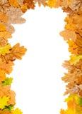 Falling leaf frame Stock Image