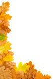 Falling leaf frame Stock Images