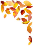 Falling Leaf Frame Royalty Free Stock Photography