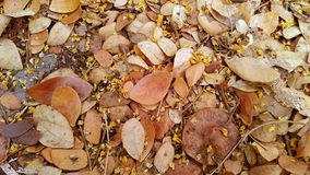 Falling leaf and flower in autumn. Falling leaf scattered in autumn background royalty free stock photos