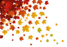 Falling leafs Stock Photography