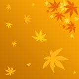 Falling leaves. Falling colorful leaves Stock Photography