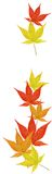 Falling leaves. Maple leaves falling isolated on white background Royalty Free Stock Photo