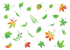 Falling leaves. Various leaves set. Illustrator 8 eps file included Stock Image