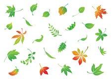 Falling leaves Stock Image