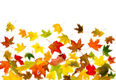 Falling leaves. Falling colorful autumn maple leaves background royalty free stock photos