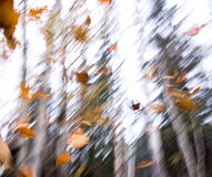 Fall autumn leaves Stock Photos